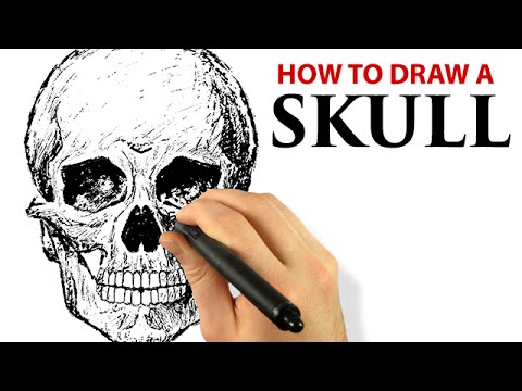 Human Skull - Draw This [Episode #30] (Painter 2015 Tutorial)