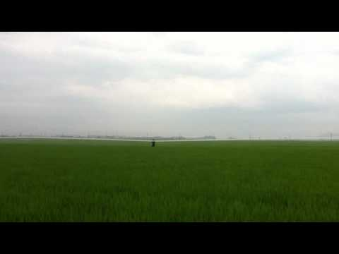 7am farmer putting down pesticides 全身の殺虫剤 on rice