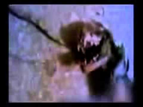 Mystery Animal Ru Russia Animal Girl  Demon Real video