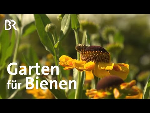 Garten Für Bienen In Ellingen | Frankenschau | Reportage