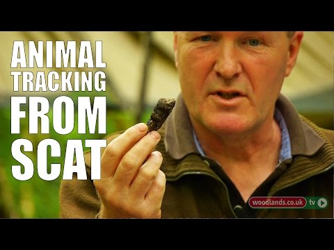 Tracking Animals From Scat video