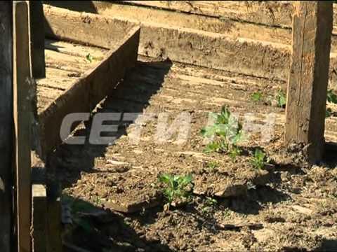 Концлагерь для домашних животных обнаружен в Кстовском районе