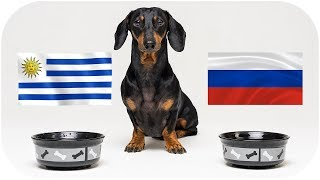 Oracle dog tell you who will win! FIFA World Cup 2018 Uruguay vs Russia!