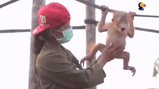 Orangutan Learns How To Climb After Losing Mom | The Dodo