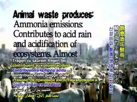 UN Report on Livestock