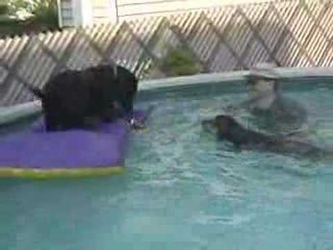Dogs Love Water - Funny Pet Tricks