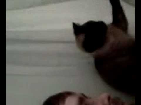 Wet Pussy video