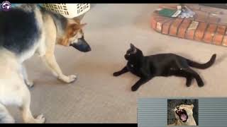 Funny Dog and Cat Videos Cats vs Dogs Compilation - by Pet Friend