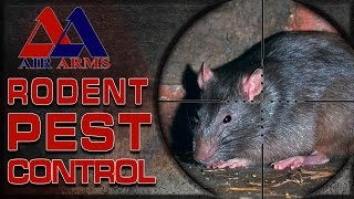 Airgun Hunting - Rodent Pest Control!