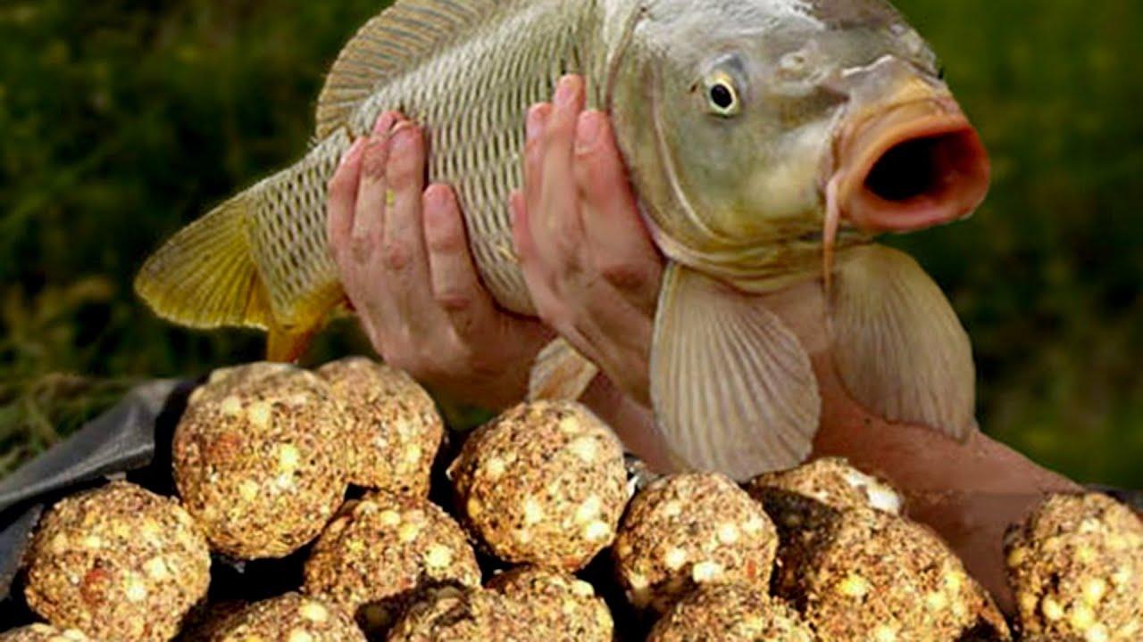 Прикормка для рыбы. Прикормка для рыбалки своими руками в 44