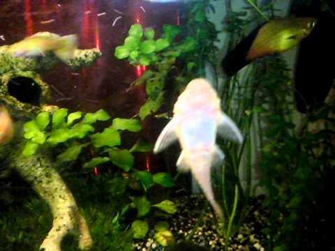 Tortue d 39 eau chaude aquarium images for Aquarium eau chaude