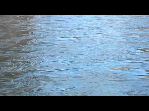 Cowlitz River 2 21 2015