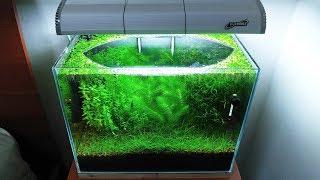 15th Month - (The Baby Becomes a MOM) NO filter, NO CO2, NO Ferts 5 Gallon Nano Tank