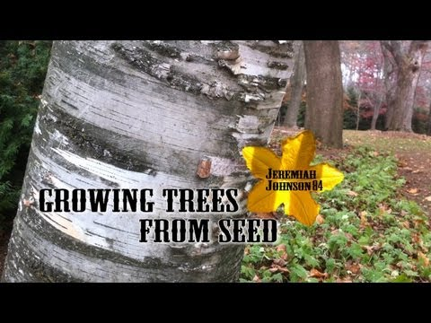 Birch Seeds to Birch Trees- Part 1: Growing Trees From Seed S01:E04
