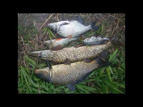 рыбалка на днепре карпа запорожье
