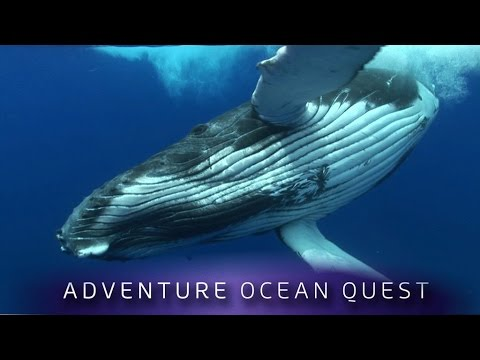 ► Adventure Ocean Quest - The Giants of Rurutu (FULL Documentary)