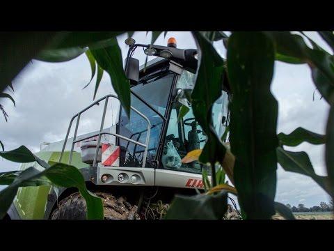 Kukurydza 2016! Nowak Usługi - Handel