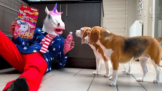 Dogs Vs American Unicorn Prank : Funny Dogs Louie and Marie