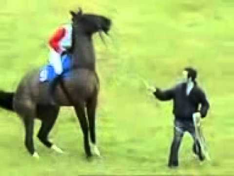Horse Funny Video 2013