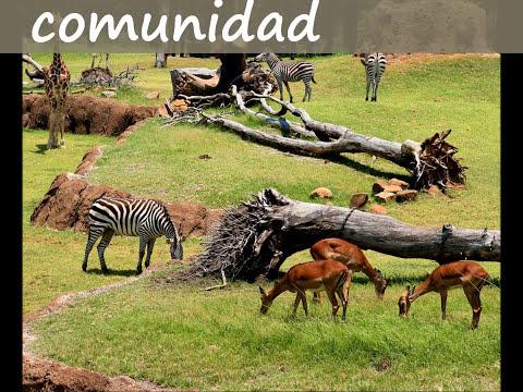 Conceptos individuo, poblacion y comunidad.wmv