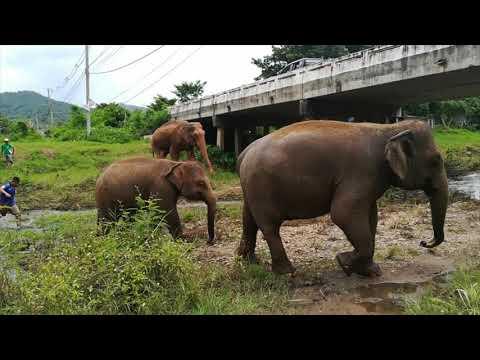 Tuk Tuk udflugt og elefant reservat