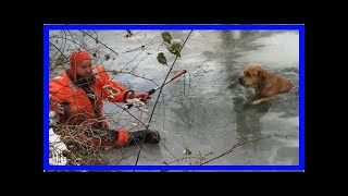 | Dog Rescue StoriesFirefighters Rescue A Missing Dog Trapped In The Ice Of A Frigid Creek