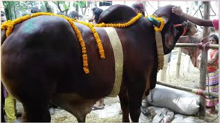 Cow price of Tk 10 lakh ... kene color? ? ?