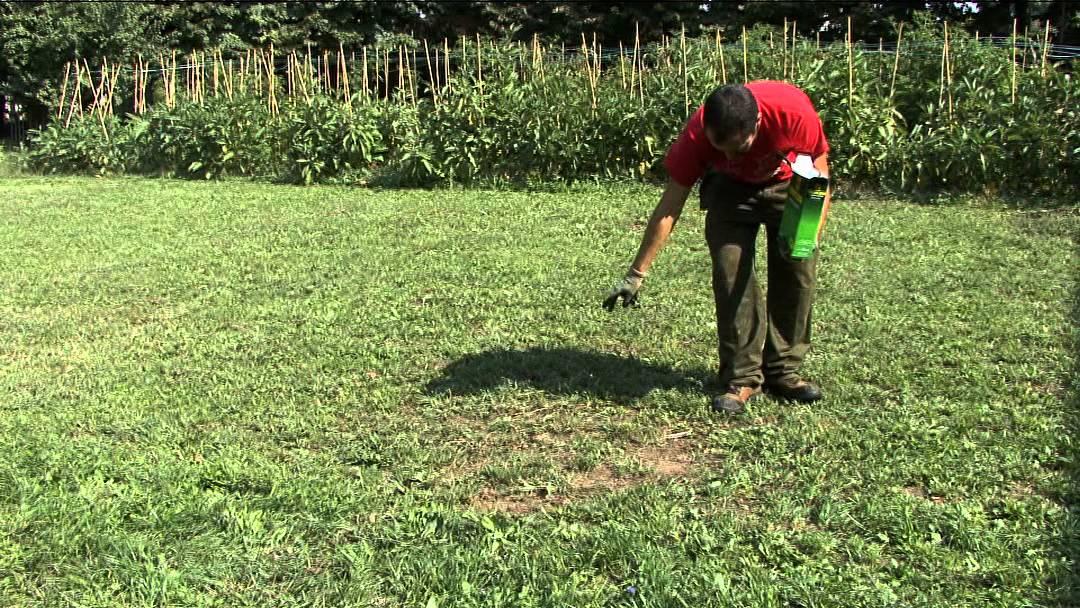 La semina del prato in autunno youtube for Rinfoltire il prato