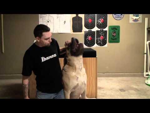 Mastiff Home Defense Dog Days
