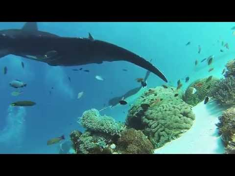 Diving With Manta Rays In Komodo Islands