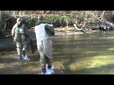 Steelhead Fishing Elk Creek Pennsylvania 2011