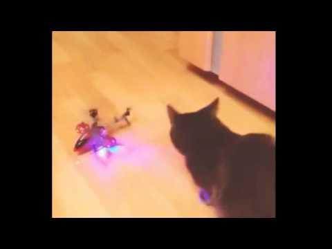Кот vs вертолет