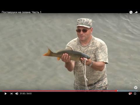 рыбалка в хакасии на сазана в заливах