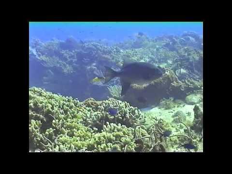 Scuba Dive -  February, 2005 - Cozumel & Akumal, Mexico