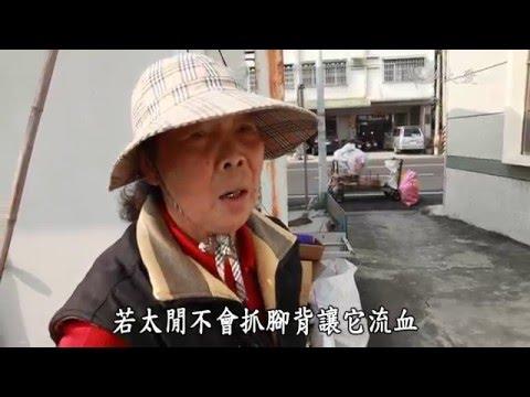 台綜-草根菩提-20160425 秋梅萬歲