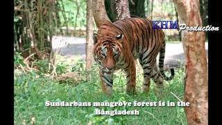 The Sundarbans in Bangladesh-travelersworld