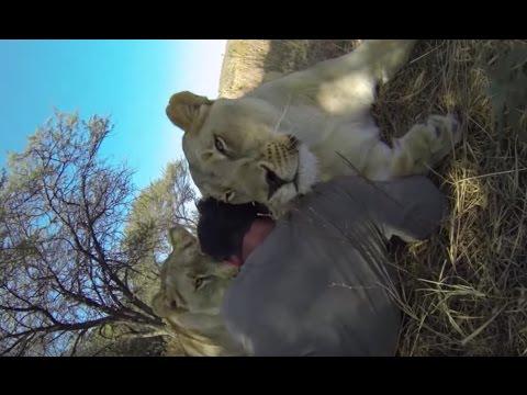 Lion Gets JEALOUS | The Lion Whisperer