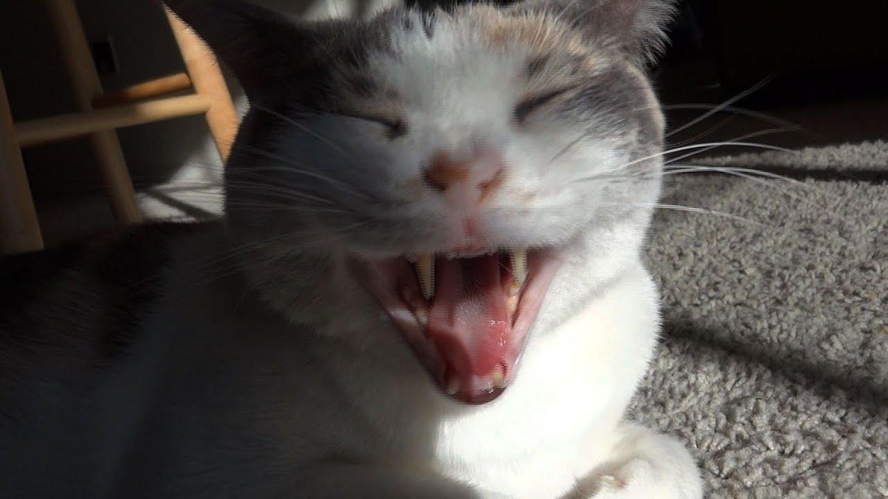Funny Cat Gif Memes