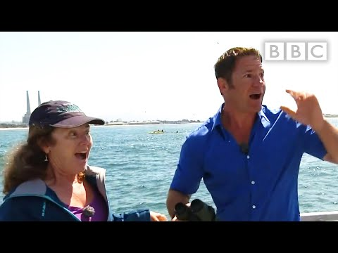 Live interview interrupted by Blue Whale - Big Blue Live: Episode 3 - BBC One