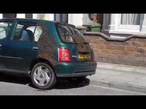20,000 Bees Swarm Car In Portsmouth  George Heal