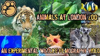 ANIMALS AT LONDON ZOO- an experimental wildlife filmography video!