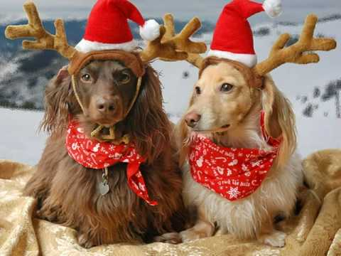 Christmas Gone To The Dogs