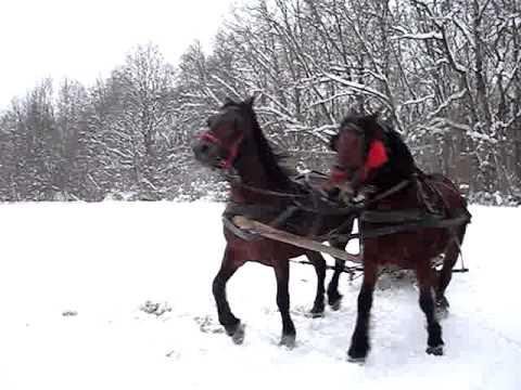 Victoras si caii lui