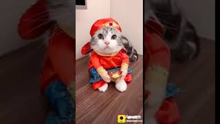 Cat Animal Funny Video