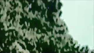 Watch Super Furry Animals Ohio Heat video