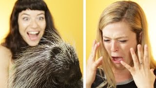 Animal Lovers Get Surprised With Porcupines
