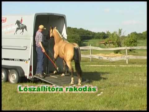 Hogyan kezdjünk foglalkozni a lovunkkal? 3. rész