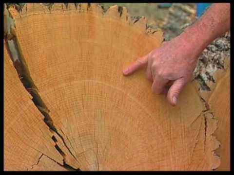 How Tree Rings Tell About Climate