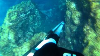 Pesca Submarina Terceira Açores - Spearfishing Azores Terceira Island