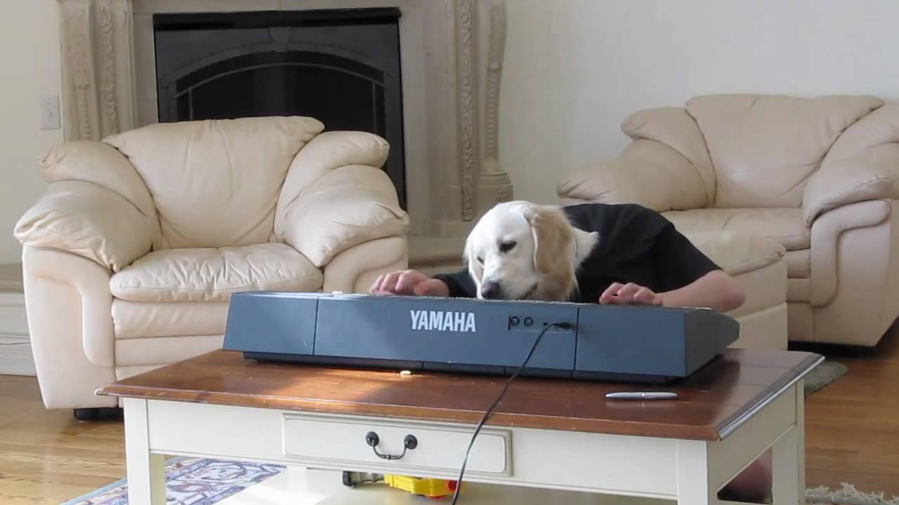 Dog And Human Mix Maxresdefault.jpg
